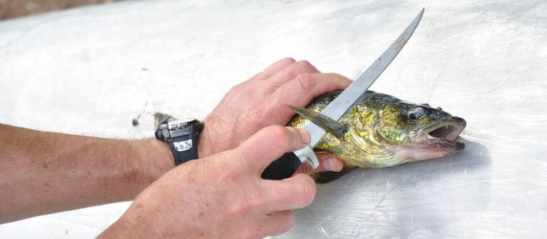 Best Fillet Knife for Walleye